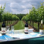Hickory Hill vineyard with SML map and wine