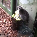 Photo de Bristol Zoo Gardens