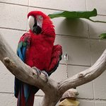 One of the parrots inside the dome