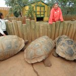 500-pound turtles available for petting :)