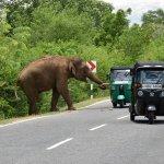 Foto de Nami Lanka Tours Day Tours