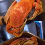 Fresh Dungeness Crab