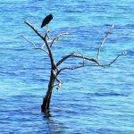 Photo of Painapo Beach Moorea