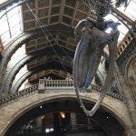 Museu de História Natural, atração gratuita imperdível