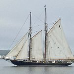 Bluenose II in Halifax Harbour.
