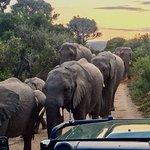 Group of elephants walking by our car.
