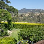 One of the stunning views from Audrey Wilkinson Vineyard