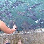 feeding the fish.