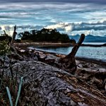 Driftwood at Pipers Lagoon