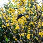 Hush Gardens - Tui