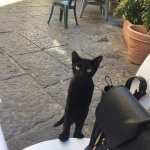 Lunch companion - sweet little local cat