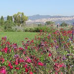 Vendita piante rare Assisi alla Festa delle salvie e presso IL VIVAIO IL LAVANDETO DI ASSISI