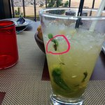 The drink with the COCKROACH in it !