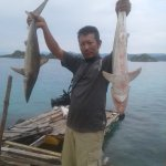 Perburuan Ikan Hiu masih menjadi kegiatan umum masyarakat Nelayan sekitar Pulau Sombori