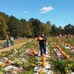 The tram takes you here to the pumpkin patch to select yours.