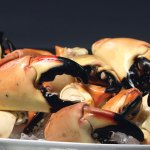 Fresh Florida Stone Crab