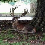 Photo de Woburn Abbey and Gardens