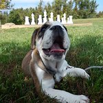 Our pup Sage enjoying the grounds near the chessboard.