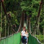 Hower Monkey crossing the bridge.