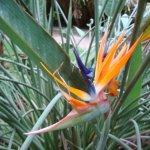 Jardin d'Eden Foto