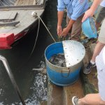 fish to be released back into the river