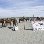 The beach near the hotel has Chenois Creek, a horse-rental setup to enjoy the surf on a pony.