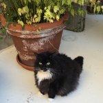Rosie, Sara's cat