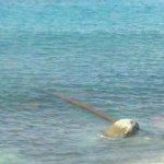 Photo of Le Casette sul Mare