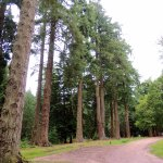 Part of the Tall Trees walk