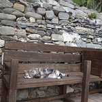 Gatto residente