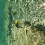 Photo of Sea Club Aqua Park & Spa