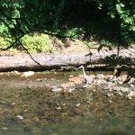 Foto de Housatonic River Walk