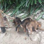 Photo de Jungle Beach VietNam