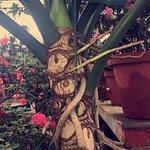 Photo de Rose Gardens Homestay