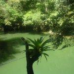 Vegetación en el Río Claro