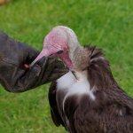 Gonzo feeding