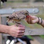Little Owl lunch