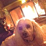 My dearest little Fritzi enjoying the fire in our cabin.