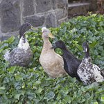 We loved taking strolls on the grounds and watching the four adult ducks supervise their 10 kids