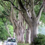 Beech Tree Lane: Game of Thrones