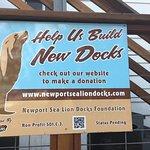 The Sea Lions need new docks!!!