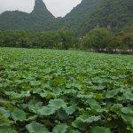 Foto de Yangshuo Park