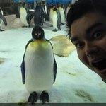 Penguins at the aquarium