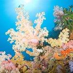 Beautiful Rainbow Reef