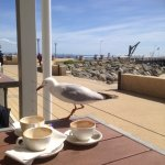 A seagull inspecting the dirty coffee cups that graced our table for most of the meal.