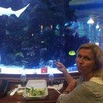 The Shark Pit fish tank