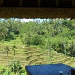 Rice terraces viewed from our private lunch position