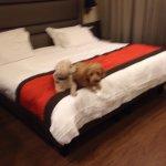 Photo de Holiday Suites
