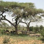 Photo de Sanctuary Kusini, Serengeti