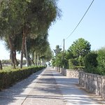 Path leading to the beach